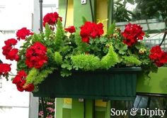 10 Window Box Planter Ideas
