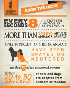 Shelter pets. Only 20-30% are ever adopted! NEVER buy from pet stores or breeders if you want to be part of the solution!