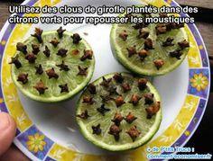 Utilisez des clous de girofle plantés dans des citrons verts pour repousser les moustiques