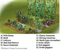 -Vegetable Garden Vision Vegetable Garden Vision See it Garden Types, Types Of Vegetables, Organic Vegetables, Organic Gardening, Gardening Tips, Flower Gardening, Garden Soil, Vegetable Garden Planner, Small Vegetable Gardens