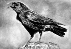 How to Draw a Realistic Crow, Draw Crows, Step by Step, Realistic, Drawing Technique, FREE Online Drawing Tutorial, Added by catlucker, September 3, 2012, 7:50:01 am http://www.dragoart.com/tuts/13297/1/1/how-to-draw-a-realistic-crow,-american-crow.htm