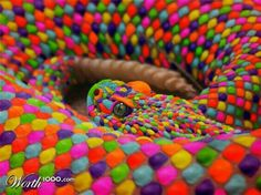 The rainbow snake 2 Pretty Snakes, Cool Snakes, Colorful Snakes, Beautiful Snakes, Colorful Animals, Scary Snakes, Rare Animals, Animals And Pets, Beautiful Creatures