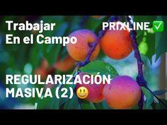 PRIXLINE ✅ Regularización MASIVA para TRABAJAR en el CAMPO (2) 😃 - YouTube