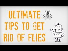 ULTIMATE Tips on How to Get Rid of Flies | Getting Rid of Flies Inside a...