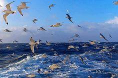 Enquanto houver água na sua fonte haverá muitos pássaros para Usufruírem dela. Projeto Educação Ambiental Cinema 4D