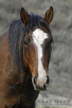 All The Pretty Horses, Beautiful Horses, Animals Beautiful, Funny Horses, Cute Horses, Farm Animals, Cute Animals, Bay Horse, All About Horses