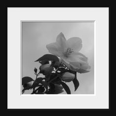 Black and White Home Decor Fine Art White by ChaiseLongueGallery, $10.00