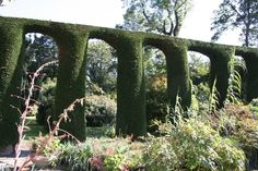 GardenDrum Mt Stuart, Nth Ireland Green Backgrounds, Topiary, Hedges, Evergreen, Ireland, Waves, Gardens, Outdoor Structures, Plants
