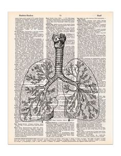 This graphic of a set of lungs is from a vintage medical book. It has been carefully restored and reprinted on a real dictionary page and is ready for you to put it in your own frame. Features: - Size