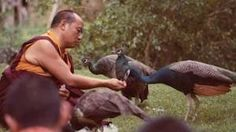 Buddha Buddhism, Tibetan Buddhism, Vajrayana Buddhism, Be My Teacher, Spiritual Teachers, Spiritual Path, Garden Sculpture, Religion, Spirituality