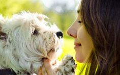 nice Dog Health Questions Answered