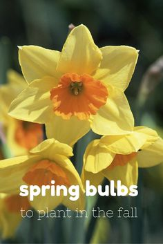 Spring Bulbs to Plant This Fall >>  http://www.hgtvgardens.com/photos/flowering-plants-photos/types-of-spring-bulbs?soc=pinterest
