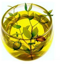 Characteristics of Common Carrier Oils    Jojoba- The carrier of choice for perfumery, jojoba is technically not an oil but a liquid wax. It does not oxidize or become rancid. A small amount (10 percent) can be used to extend the shelf life of all blends. Because jojoba is very similar to the sebum produced by our own skin, it is particularly beneficial in facial and body oils, and it is also recommended for scalp and hair treatments. It is derived from the seed of the desert shrub.