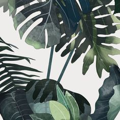 Lately I was working on a #botanical #illustration - now the preview. I can't wait to show you the whole piece :) #botanic #foliage #leaves by agata_wierzbicka