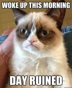 Grumpy cat meme ...For more funny cat quotes and humor pets visit www.bestfunnyjokes4u.com/lol-funny-cat-pic/