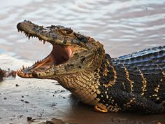 Nature Tours in National Protected Areas Types Of Animals, Animals And Pets, Cute Animals, Cute Reptiles, Reptiles And Amphibians, All Animals Pictures, Swamp Creature, Animal Medicine, Mundo Animal