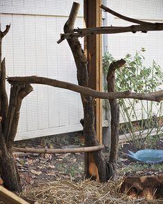 inside a chicken coop | Wooden Nest: Week 16: The Chicken Coop