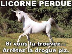 image drole licorne