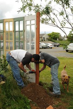 Screwing together the funky part of a fence, reusing glass doors from a greenhouse, Jose and Tito, with Rosie helping in foreground, Broadview duplex, Seattle, Washington, USA by Wonderlane, via Flickr