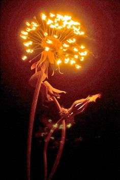 Sculpting with Fire: An artist who burns her creations.