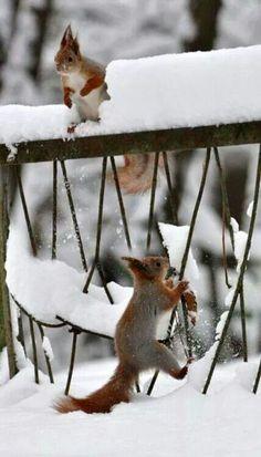 Egern nyder sneen!