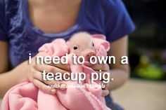 teacup pigs, are you serious?! I'm in!