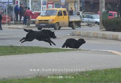 The chase www.ro/non-humans Dogs, Animals, Animales, Animaux, Doggies, Animal, Animais, Dieren, Pet Dogs