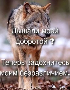 Some Quotes, Wisdom Quotes, Favorite Quotes, Best Quotes, Russian Quotes, Truth Of Life, Clever Quotes, Life Motivation, Positive Quotes