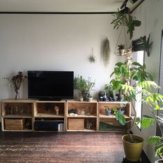 りんご箱/テレビ/植物のある暮らし/レデッカー/Loungeのインテリア実例 - 2015-11-05 10:18:40 | RoomClip(ルームクリップ)