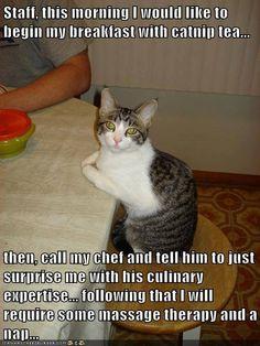 Fancy kitty! http://sulia.com/channel/cats/f/1e49d4db-ff32-4678-bc57-373008720cf6/?