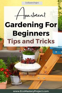 Love gardening but don't have a yard? You're not out of luck! There are many ways to grow your own vegetables and flowers in an apartment, even with limited space. Whether you want to start from seed or buy plants, here's what it takes to get started on the path towards self-sufficiency. Give this article a read now if you're interested in learning more about how to garden indoors! Love Garden, Green Garden, Buy Plants, Indoor Plants, Gardening For Beginners, Gardening Tips, Recycling Plant, Succession Planting, Green Living Tips