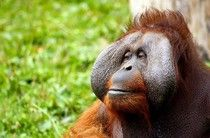 US Reduces Indonesia�s Debt To Redirect Funds Toward Protecting Wildlife