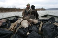 Why Geese Make the Best Duck Decoys