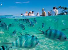 Blue Lagoon Cruises snorkelling #fiji #travel #islands