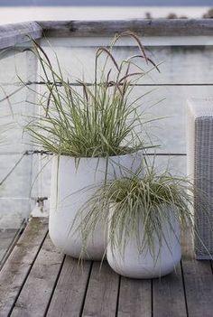 Strå i forskjellige varianter er populært denne sommeren også. Terrace Garden, Garden Planters, Concrete Planters, Outdoor Plants, Outdoor Gardens, Big Leaf Plants, Coastal Gardens, Unique Gardens, Garden Stones
