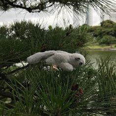 Momo-chan en la naturaleza... #momonga #ShortyEnJapon #momochan #vidaenjapon #tokyo