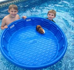 kids-in-the-pool-guinea-pig-boat