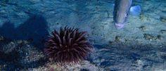 InfoNavWeb                       Informação, Notícias,Videos, Diversão, Games e Tecnologia.  : Expedição aos Corais da Amazônia surpreende pesqui...