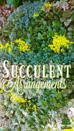 Succulent Arrangements – Such Inspirations! via @hypertufagarden