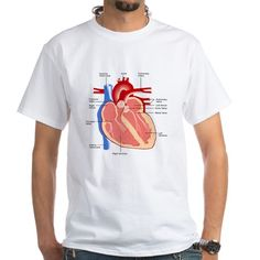 Human heart diagram. Great gifts for you favorite doctors med students or heart patients.