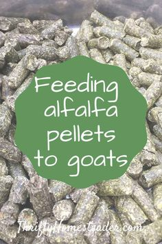 We started using alfalfa pellets years ago when we had goats that could finish all their grain faster than we could milk them. Now we also feed them to pigs Goat Feed, Breeding Goats, Boer Goats, Raising Goats, Goat Farming, Nesting Boxes, Hobby Farms, Small Farm, Chickens Backyard