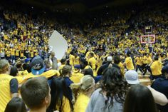 California Golden Bears and fans