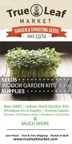 Non-GMO Seeds, Heirlooms & Organics: Herb, Garden, Microgreens, Flower, Sprouts, Wheatgrass & More