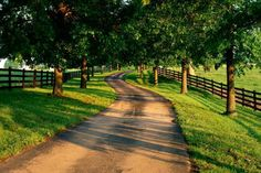 A long tree lined driveway leading to the farm house with green pastures full of grazing horses on either side has always been a rustic dream of mine for what the farm will have.