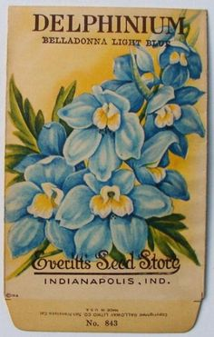 EVERITT'S SEED STORE,  Delphinium 843, Vintage Seed Packet