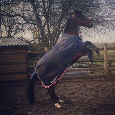 Hiver et poney 😜🦄