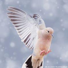dove photograph