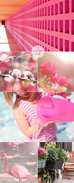summer pink photos