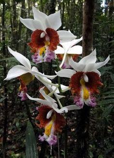 #Madagascar #orchidée                                                       …