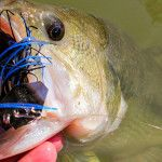 1000 images about bass fishing soft plastic lures on for Wired 2 fish
